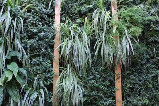 plante pour mur végétal interieur