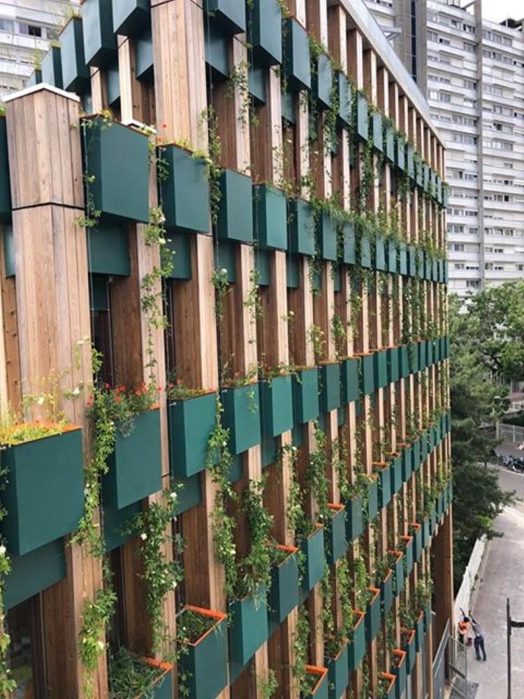 façade végétale avec plantes grimpantes