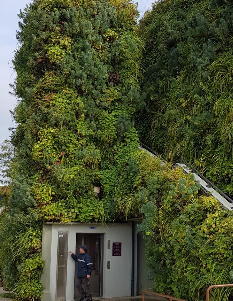 mur végétalisé ascenceur